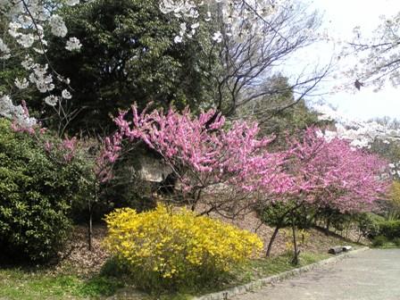 北堀公園7.jpg