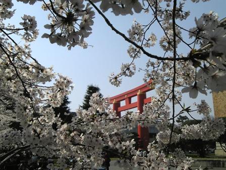桜から鳥居.jpg